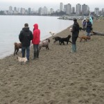 Vancouver Doodle Meetup at Kitsilano beach off-leash area